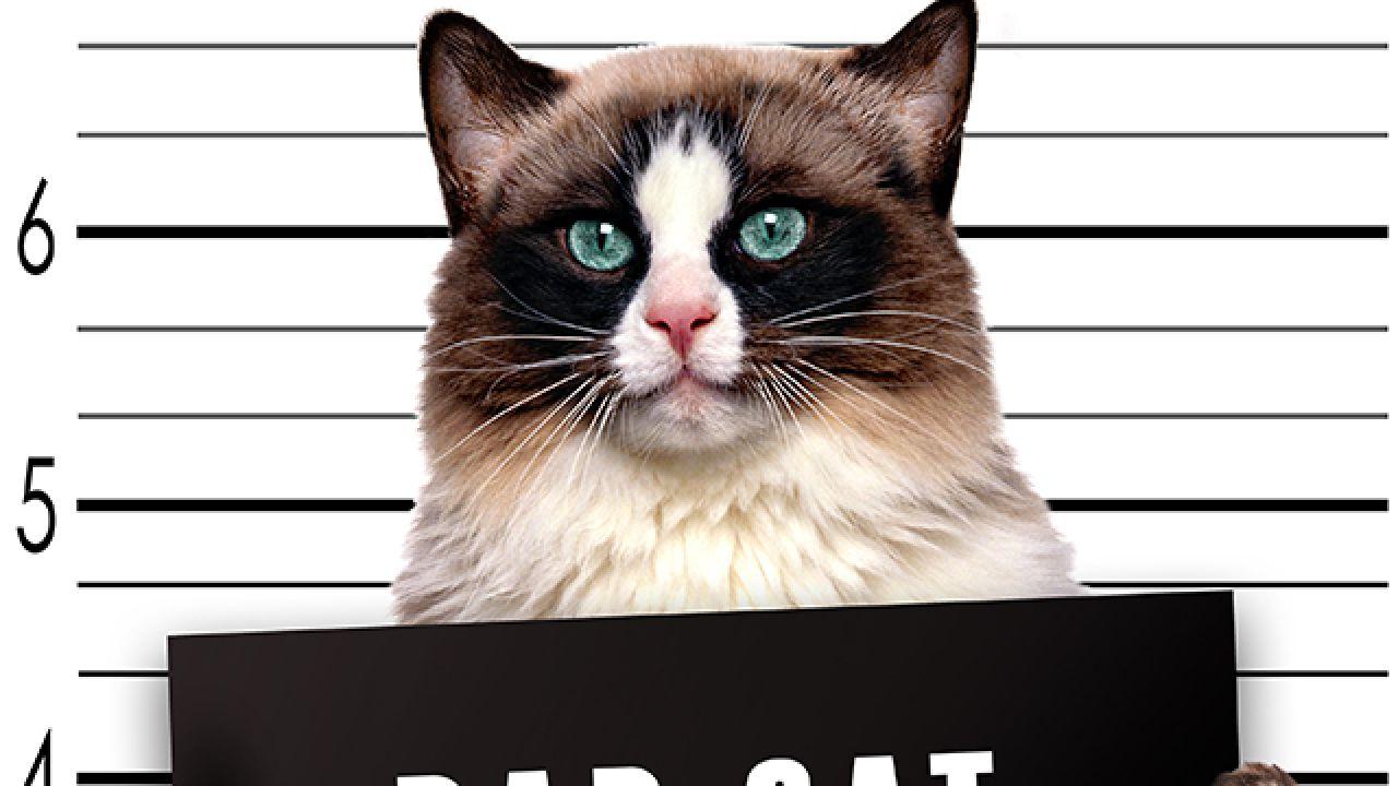 Uyuşturucu Kuryesi Kedi