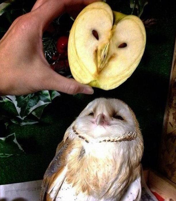 Komik Fotolar - Baykuş elmaya benzemiş!