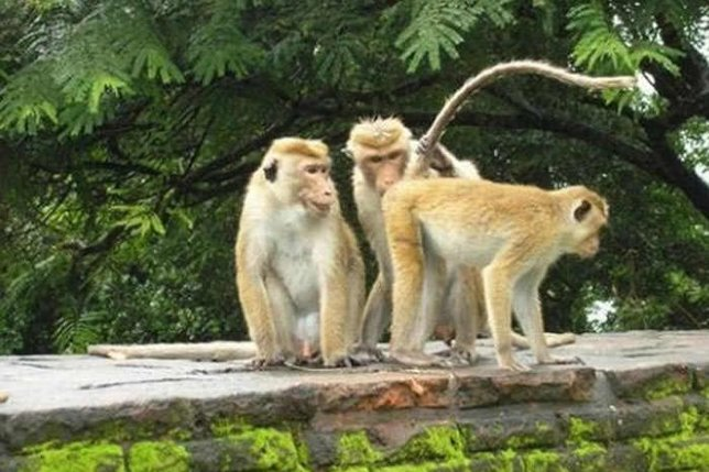 Komik Fotolar -Maymunlarda edep kalmamış