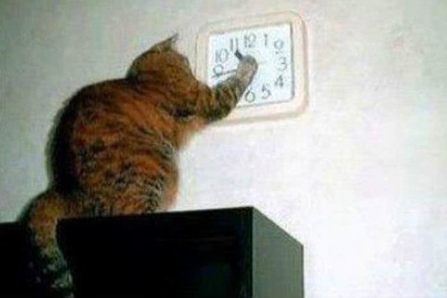 Komik Fotolar - Saati Değiştirmeye Çalışan Kedi